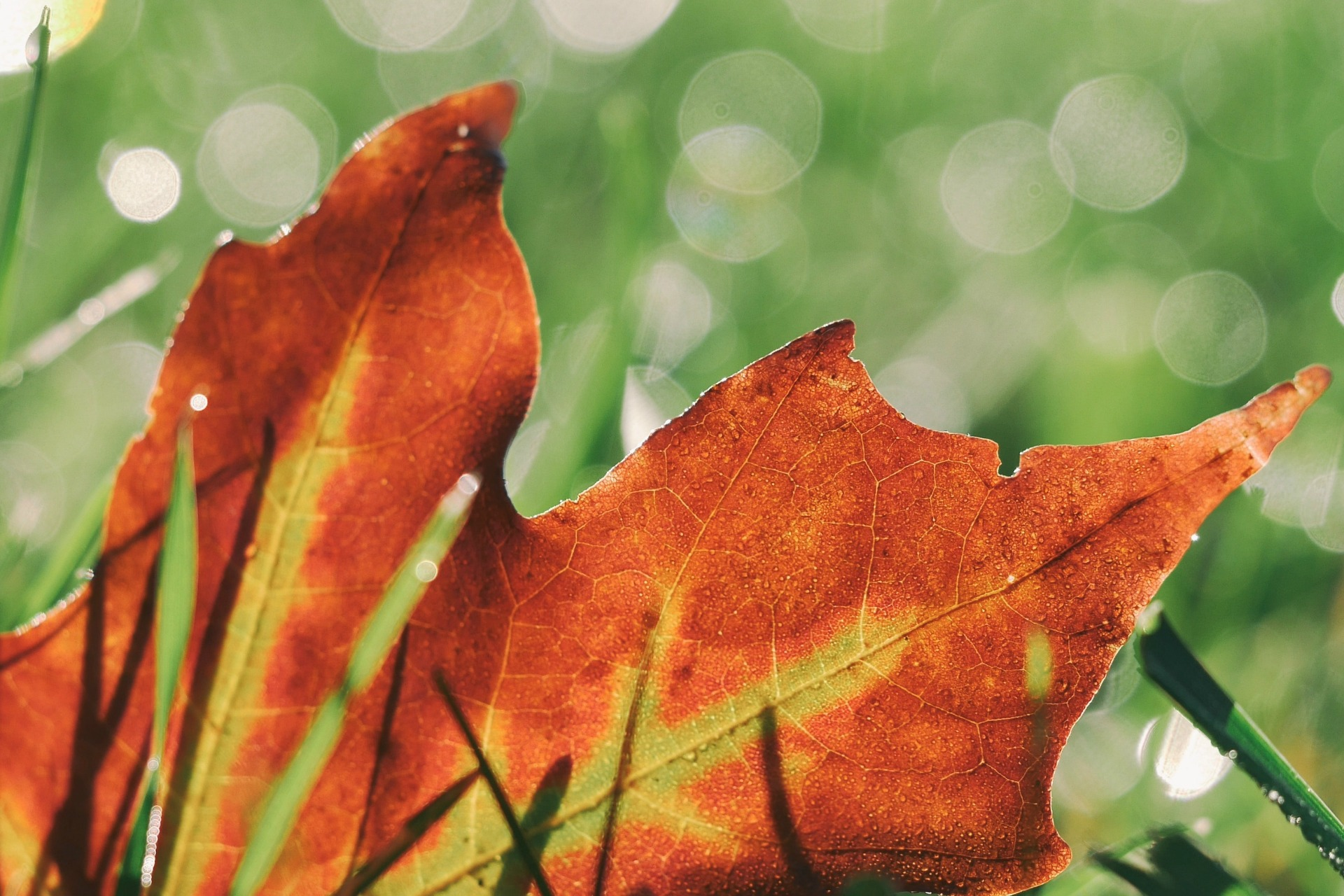 WHY SELLING IN AUTUMN COULD BE A GOOD OPTION IF YOU HAVE PROPERTY IN QUEENSLAND